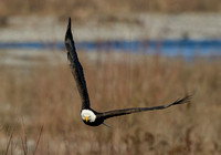 Nooksack_eagles-50