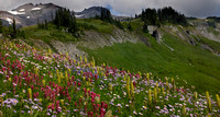 More wildflowers near Mt Rainier in clouds