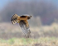 West__SEO_and_harriers-2453