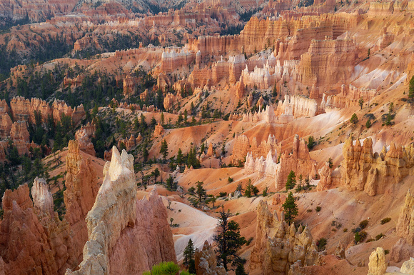 Bryce Canyon up close in morning.jpg