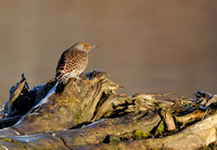Flicker in morning light